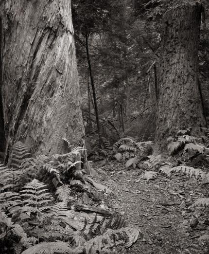 A Walk Through the Hemlocks