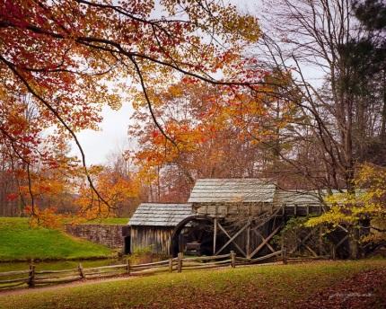 Autumn Canopy at Mabry Mill