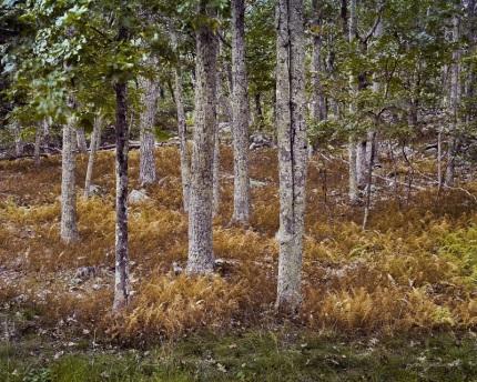 Autumn Russets Shenandoah National Park