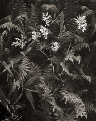 Grass Among Ferns