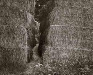 Haymakers Path