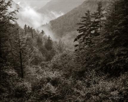 Highlands Mist