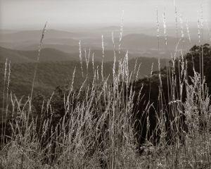 Mountain Grass Skyline Drive