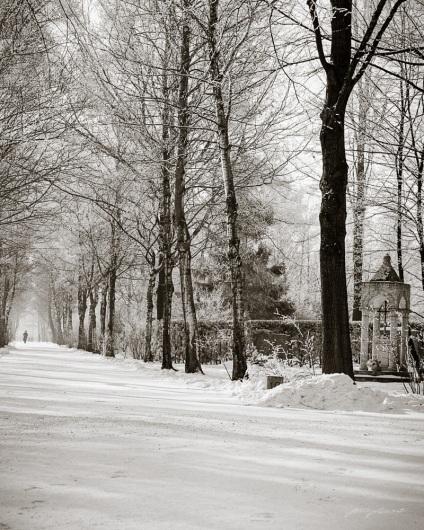 Winter Walk in Perlacher Forst