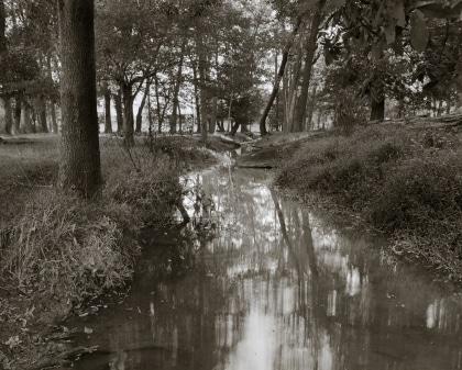 Woodlands Stream